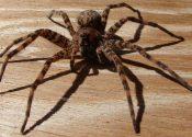 Surgery Cures Arachnophobia