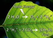 Artificial Leaves May Produce Oxygen for Future Eco-cities