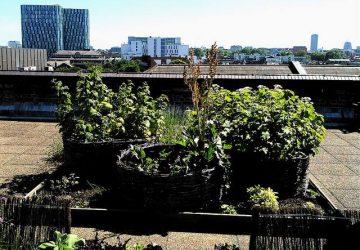 Will Urban Farming Help Feed Us All? Maybe