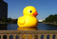 Giant Rubber Duck Project Runs A-Fowl in Philly