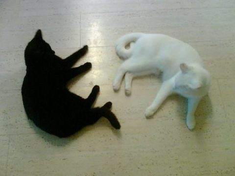 Black_cat_and_white_cat,_both_lying_on_the_floor