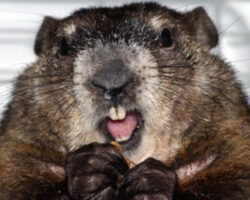 Groundhog Day Ohio